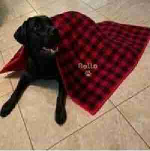 Dog and Quilt