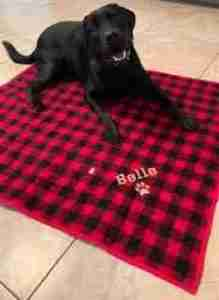 dog quilt in red and black plaid