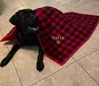 Belle on Dog Quilt
